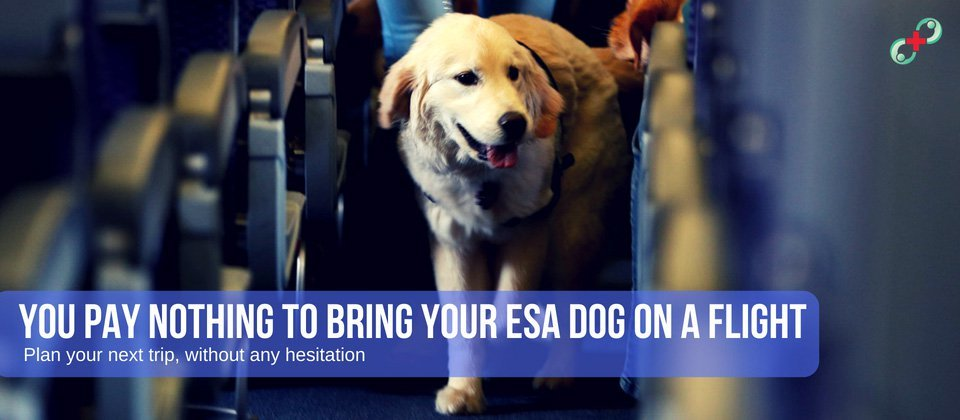 you pay nothing to bring your esa dog on a flight