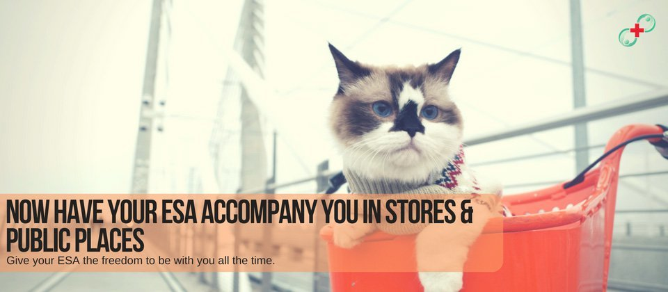 now have ypur esa accompany you in stores & public places