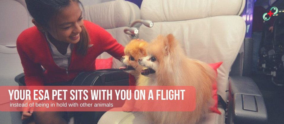 your esa pet sits with you on a flight